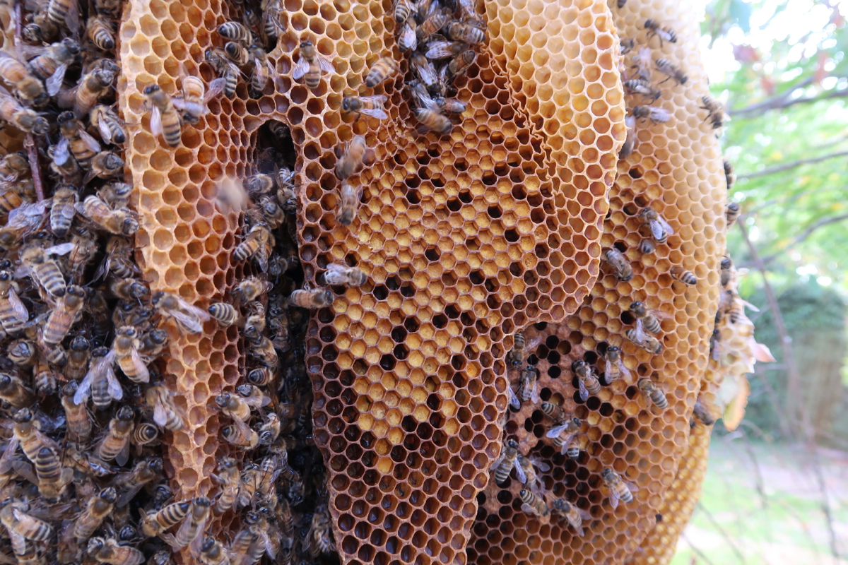 114 best Natural honey collecting and Traditional Beehives ...  Natural Beehives